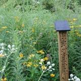 Bijenhotel in bloemenweide