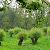 pollarded-willows-366165_1920 - cocoparisienne -  CC0 Public Domain