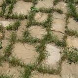 Gras tussen de voegen